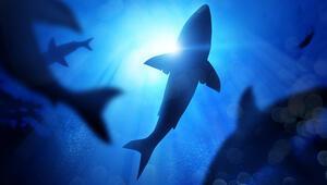 Yürüyebilen köpek balığı bilim insanlarını şaşkına çevirdi