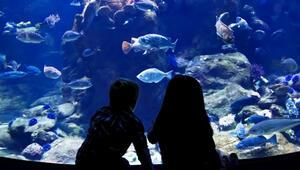 Aqua Vega'da Su Altındaki Yaşamı Keşfet