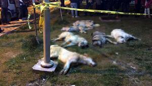 16 köpeği zehirleyen 3 kişi için 10ar yıl hapis ve tutuklama kararı