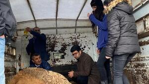 Depremde enkazdan kurtarılan hayvanlara AHBAP sahip çıktı