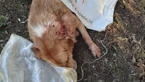 Sokak köpeğini tüfekle vurdular