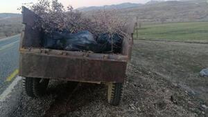 Traktör römorkunda 250 kilo esrar ele geçirildi