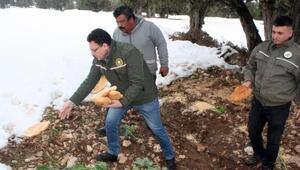 Erdemlide yaban hayvanlarına 400 kilo yiyecek bırakıldı
