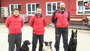 Sokak köpeği eğitilerek görev köpeği oldu
