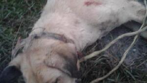 Köpeği ağaca bağlayıp döven ardından öldüren kişi gözaltına alındı
