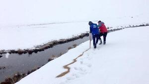 Kar kalınlığı 1 metreye ulaşınca, yaban hayvanları için yem bırakıldı