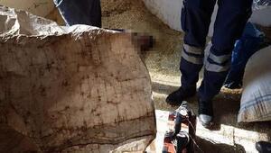 Derecikte ahıra sığınan 4 kaçak göçmenden 1i donarak öldü