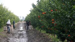 Adanada üretiliyor Avrupaya ihraç ediliyor