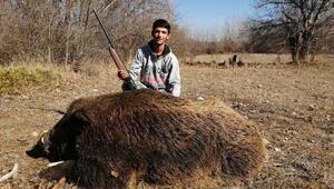 300 kiloluk Çal Canavarı, öldürüldü
