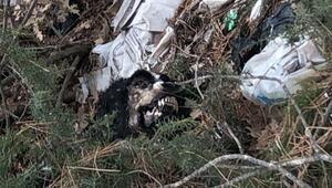 Uşakta çöplükte 20 köpek ölüsü bulundu