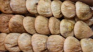 Kuru incirin ihracatı artıyor