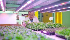 Bitki fabrikalarıyla tarım ürün fiyatları istikrar kazanacak