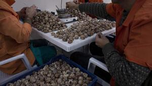 Cezaevinden Avrupaya 20 milyon adetlik salyangoz ihracatı