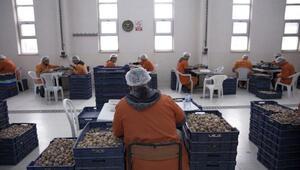 Türk cezaevinden Avrupaya 20 milyon salyangoz ihracatı-Yeniden