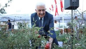 Muğlanın yerel tohumları Türkiyeye dağılıyor