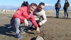 Nesli tehlike altındaki yeşil kaplumbağa ölüsü, kıyıya vurdu