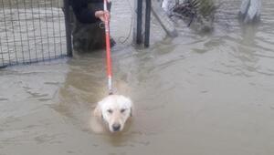 Sel sularında mahsur kalan köpek kurtarıldı