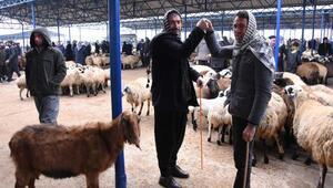 Güneydoğunun en büyük hayvan pazarı Siverekte hizmete girdi