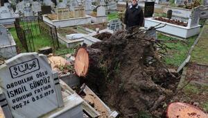 Orduda fırtınada devrilen ağaçlar mezarlara zarar verdi