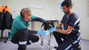 Sivas Belediyesi hayvanlara eziyet iddiasını yalanladı