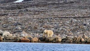 Antarktikada rekor sıcaklık değeri