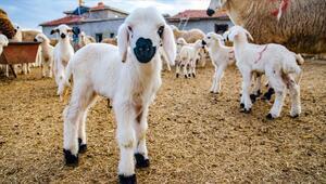 Küçükbaş hayvancılık sektörü 2023e odaklandı