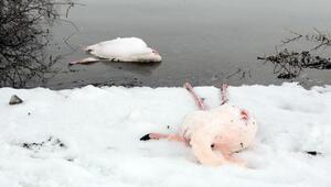 İvriz Baraj Gölünde kahreden görüntü