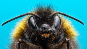 Dünyayı endişelendiren gelişme: Arıların sonu....