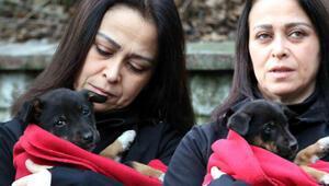 7 yavru köpeğin zehirlenerek öldürüldüğü iddiası