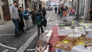 Marmarada yakalanan 150 kiloluk köpek balığına ilgi