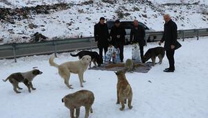Hakkaride sokak hayvanları için 300 kilo mama bırakıldı