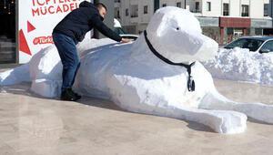 Sivasta 5 metrelik kardan kangal köpeği