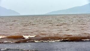 Marmaris'te şaşkına çeviren görüntü: Denizin rengi kahverengiye boyandı