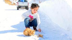 Karda kalan yavru kediye çocuklar sahip çıktı