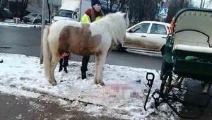 Rusyada at ile otomobil çarpıştı
