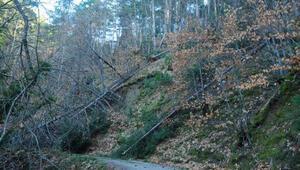 Kaz Dağlarında kar ve fırtına, ağaçlara zarar verdi