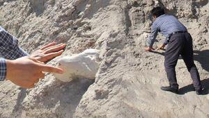 Son dakika haberler: Veteriner Kayseride buldu Tam 7.5 milyon yıllık...