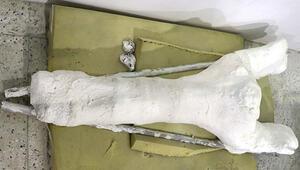 Veterinerin bulduğu 7,5 milyon yıllık fosil, file ait çıktı