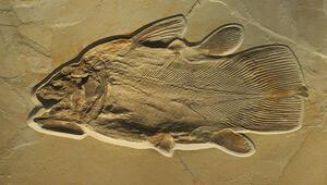 Çölün ortasında 12 bin yıllık balık fosilleri bulundu