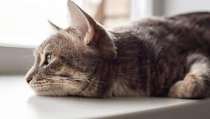 'Hayvanlar Nasıl Yas Tutar' Bilim, hayvanların duygularını fena halde hafife aldı