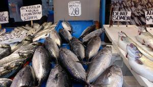 Balıkçı oyunu Palamut diye satılan o balık bakın ne çıktı...