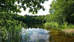 Almanya'nın cennet köşesi Müritz Milli Parkı