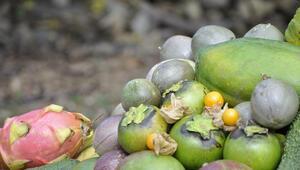 Tropikal meyvelere büyük talep