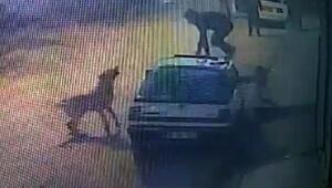 Köpeklerden kaçarken çıktığı otomobilin üstünden düştü