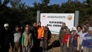 İzmirin dağlarında bal ormanları yeşeriyor