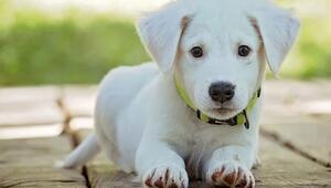 Rüyada köpek sevmek ne anlama gelir Rüyada köpek beslemek anlamı