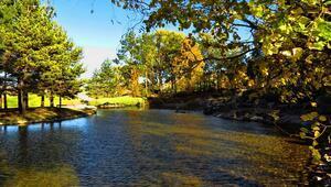 İç Anadoluda bir vaha: Japon Bahçesi