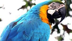 Rüyada papağan görmek ne anlama gelir
