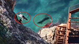 Akdeniz fokları Antalyanın falezlerinde böyle görüntülendiler