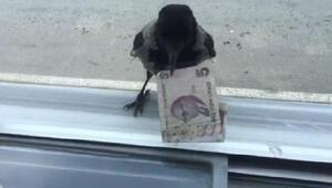 Hırsız karga bu kez 5 lira ile uçtu